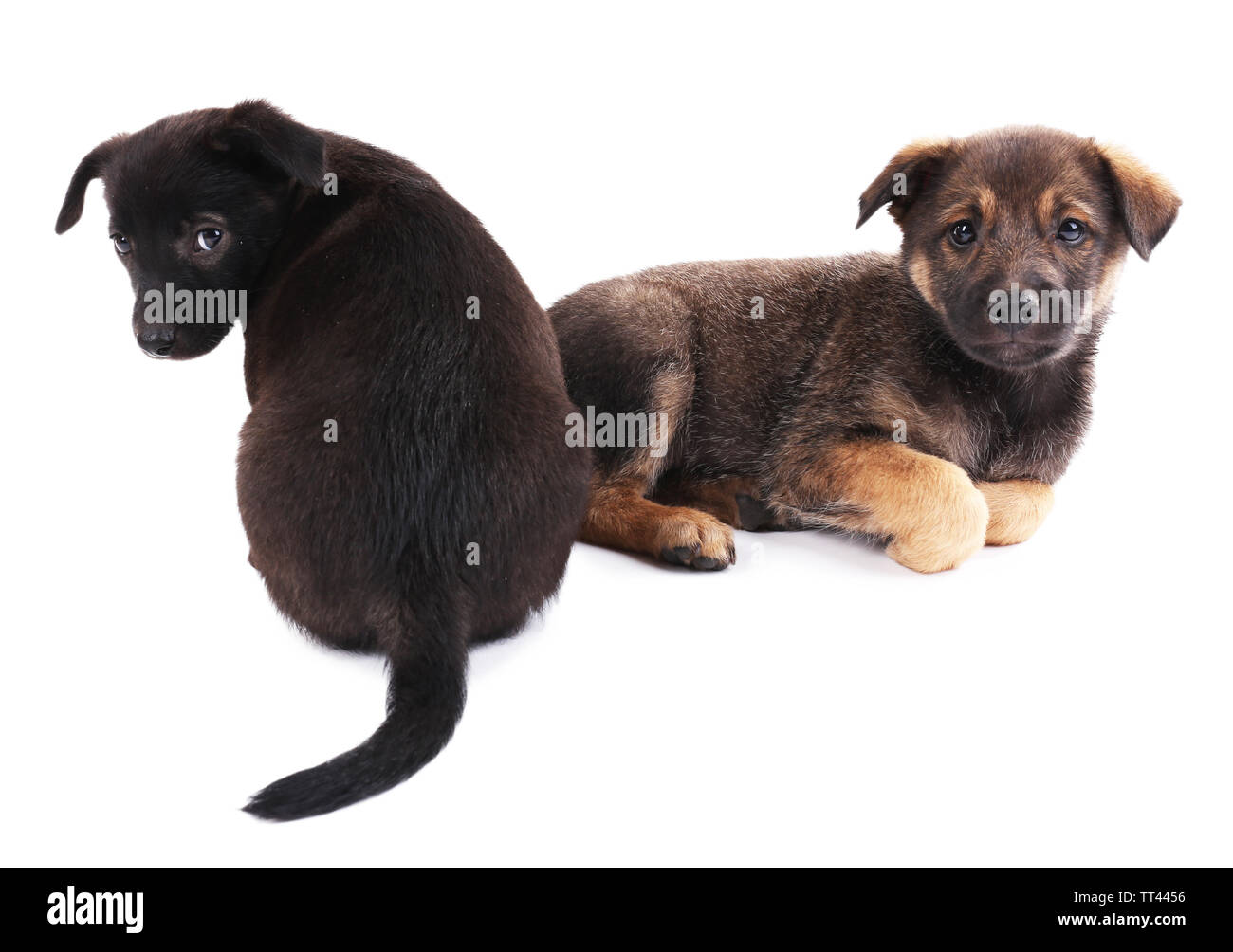 Two funny puppies isolated on white - Stock Image