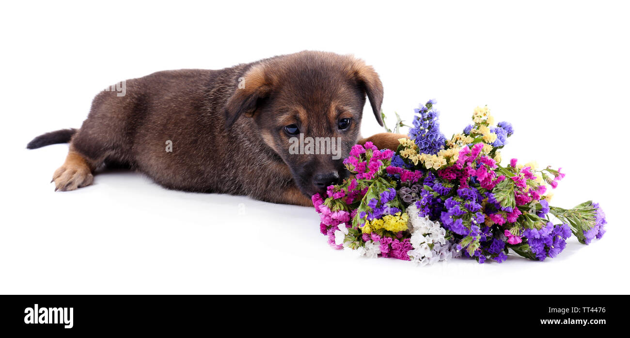 Puppy and bouquet of fresh flowers isolated on white - Stock Image