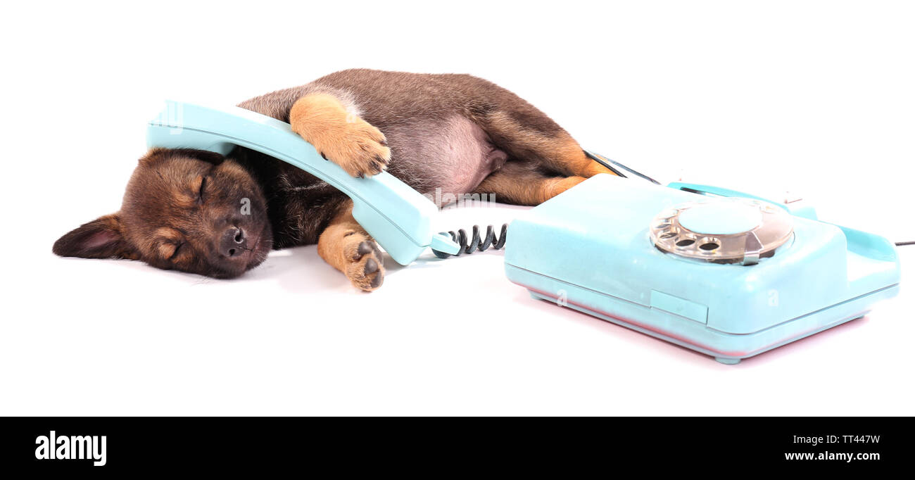 Sleeping puppy and blue phone isolated on white - Stock Image