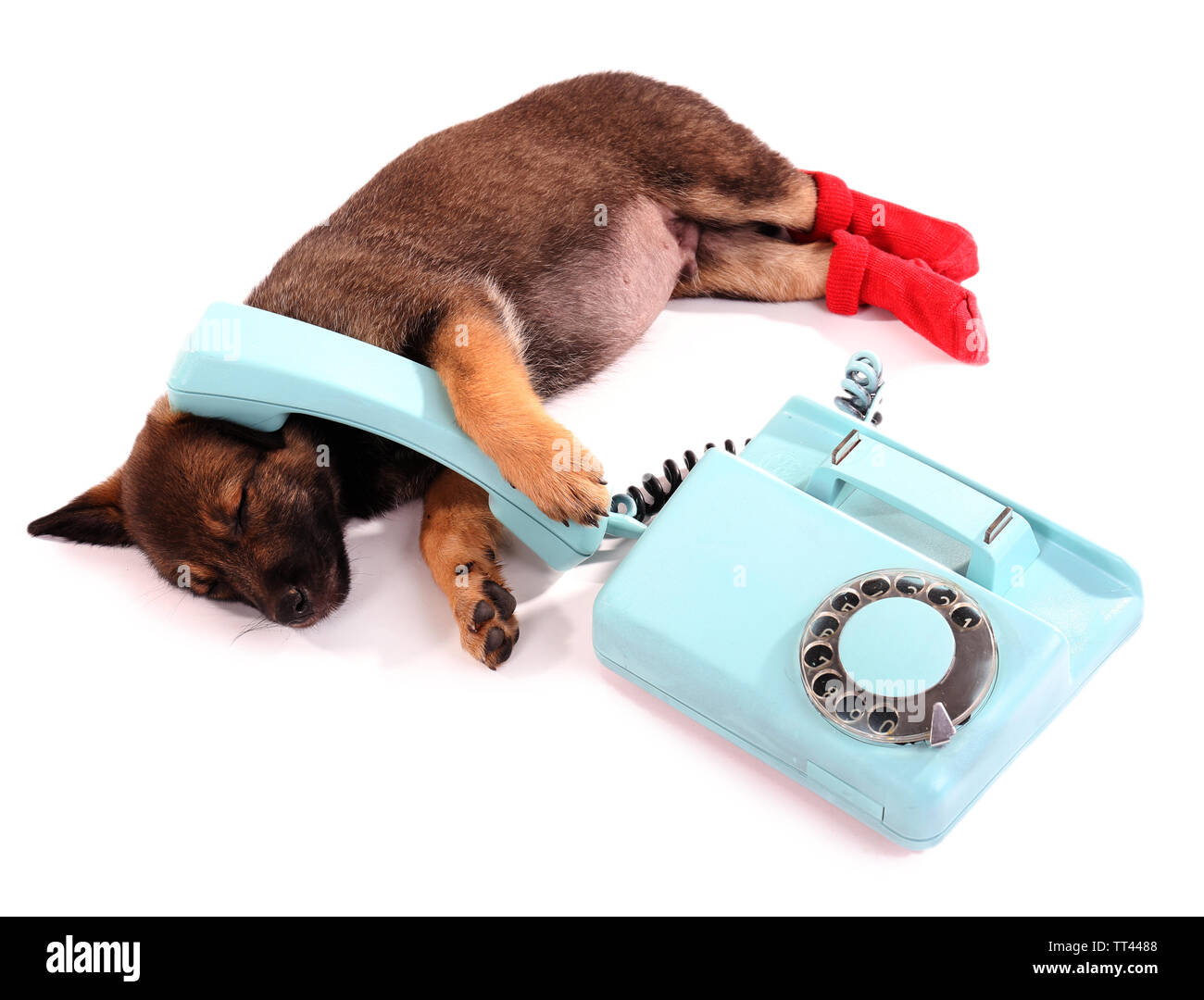 Sleeping puppy in red socks and blue phone isolated on white - Stock Image