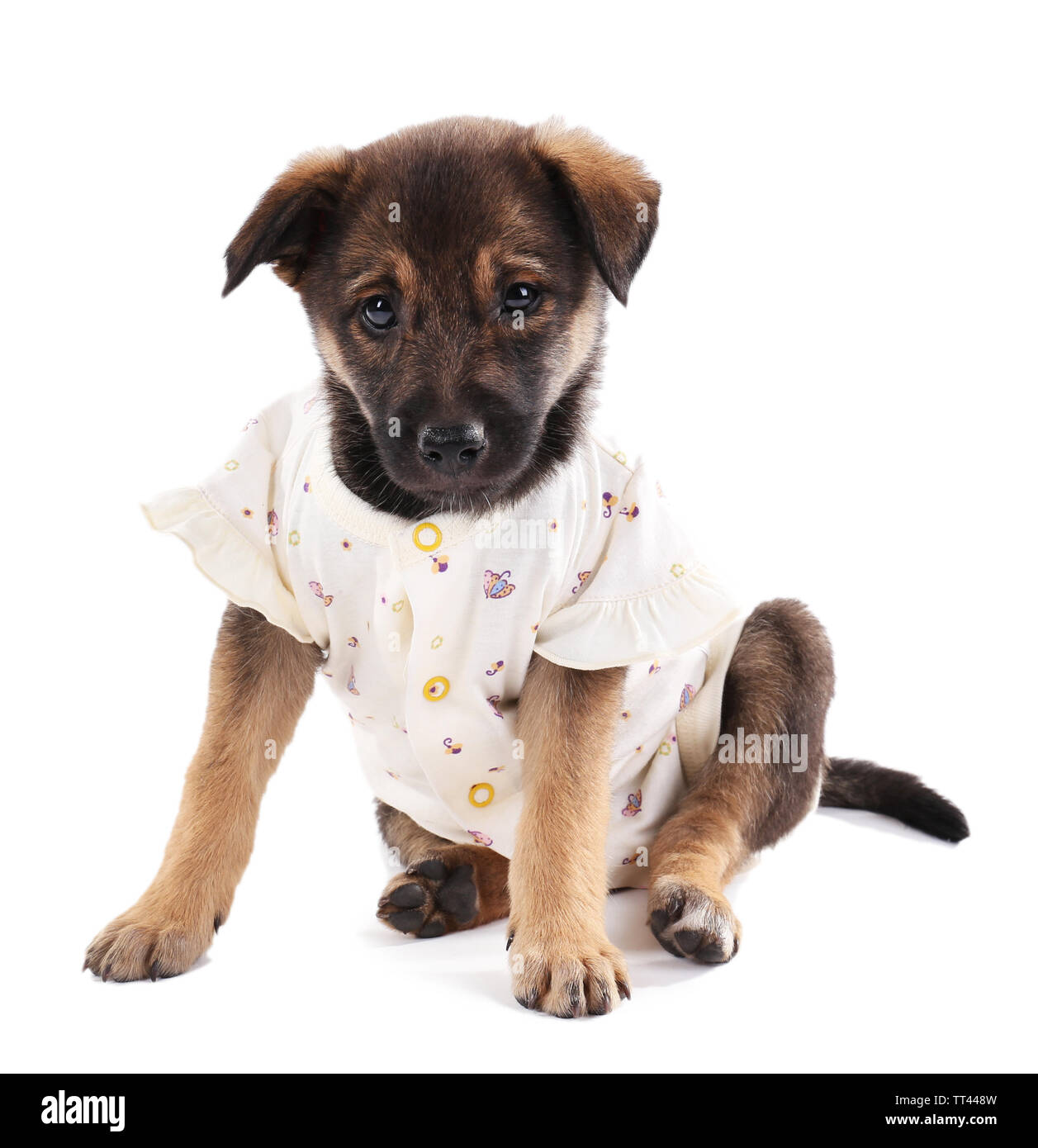 Puppy dressed in clothes for children isolated on white - Stock Image