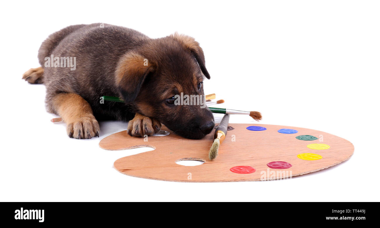 Puppy playing with a palette and brush isolated on white - Stock Image