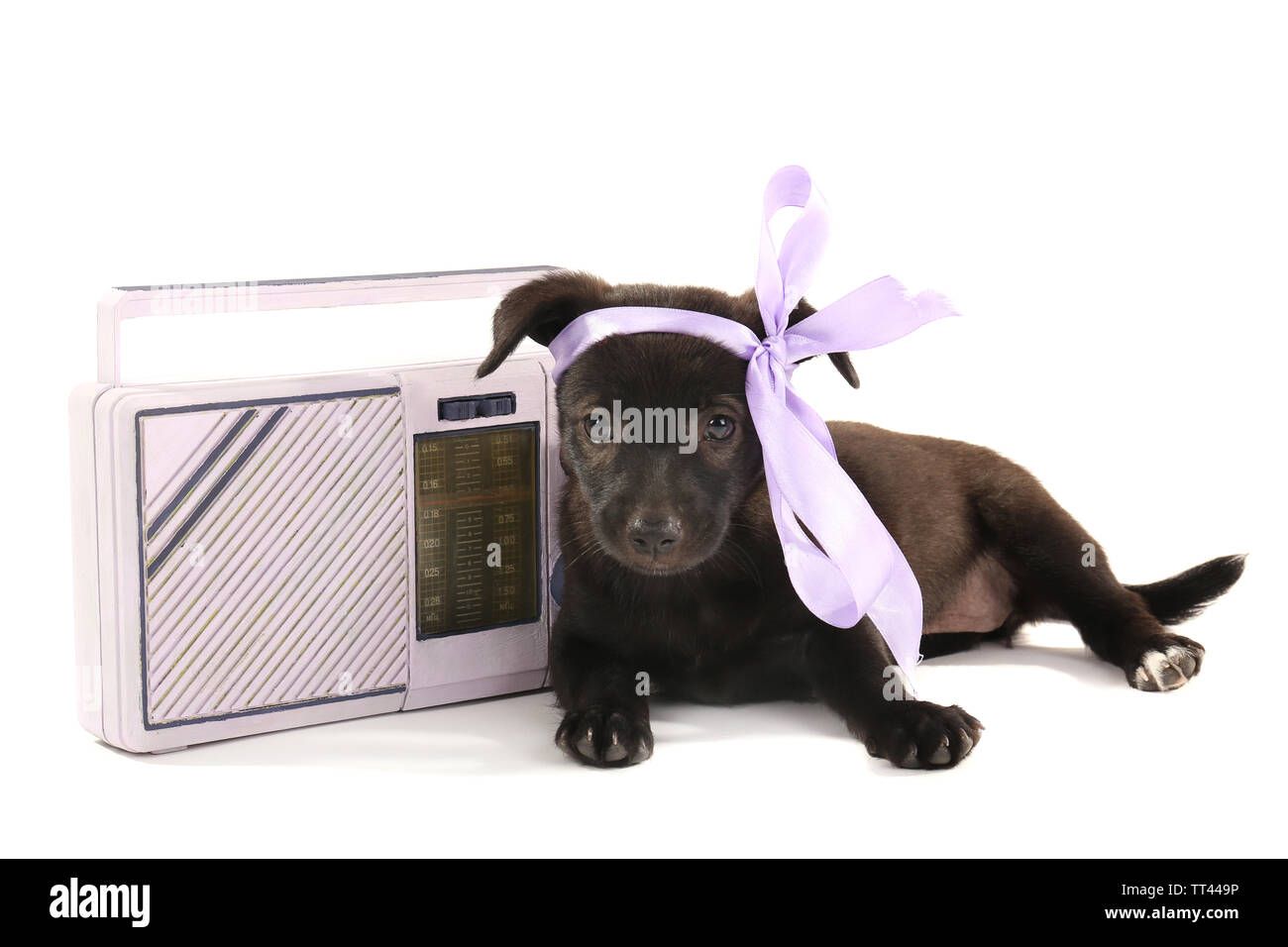 Black puppy playing with ribbon and radio beside it isolated on white - Stock Image