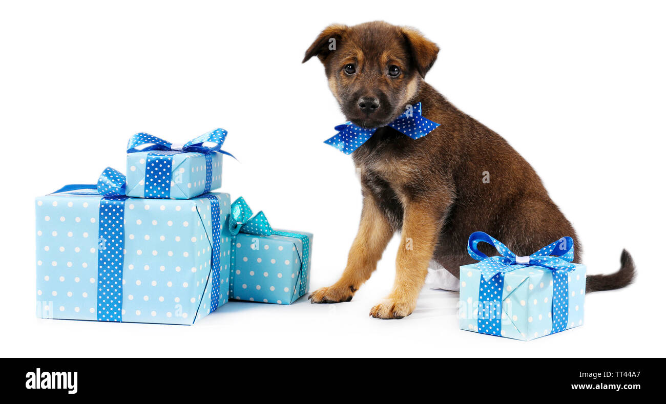Puppy and boxes with presents isolated on white - Stock Image