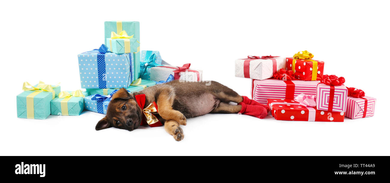 Sleeping puppy and boxes with presents isolated on white - Stock Image