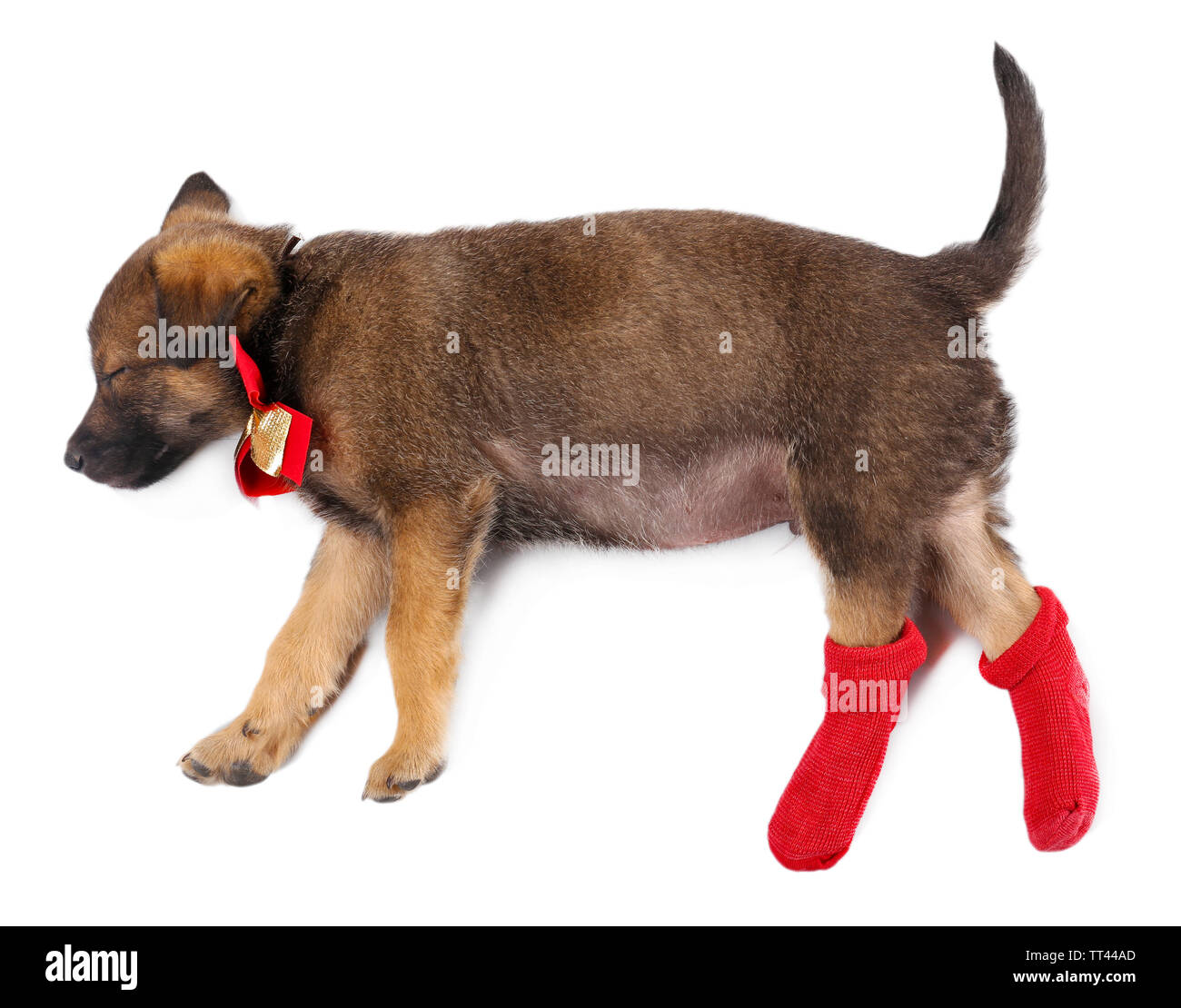 Sleeping puppy in red socks isolated on white - Stock Image