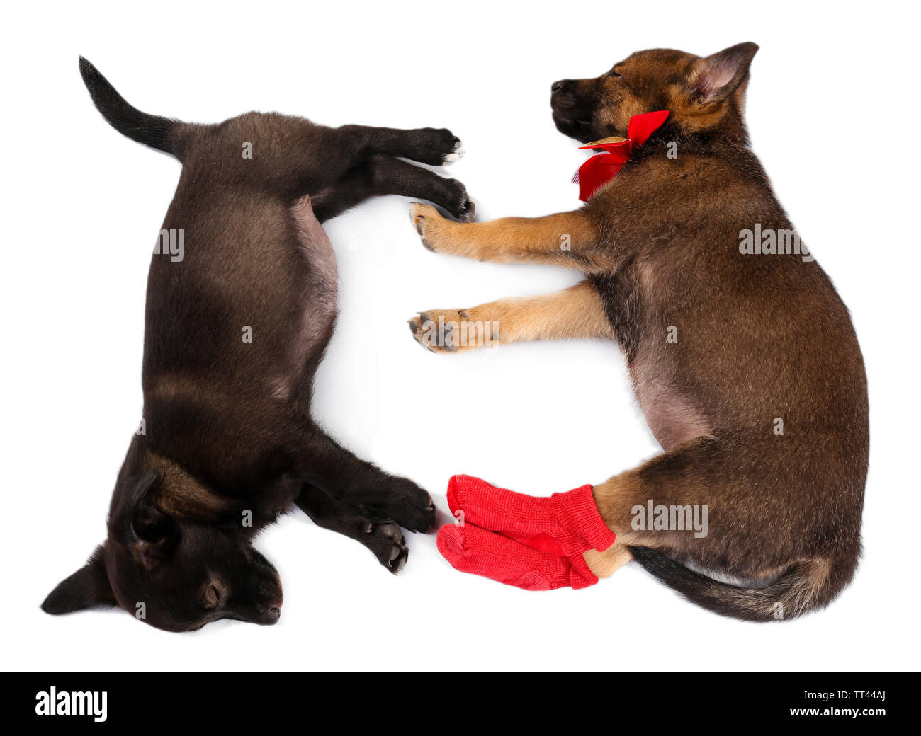 Sleeping puppies dressed in socks isolated on white - Stock Image