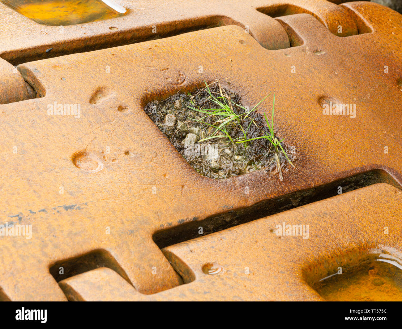 Grass growing in a bulldozer track against the odds!! - Stock Image