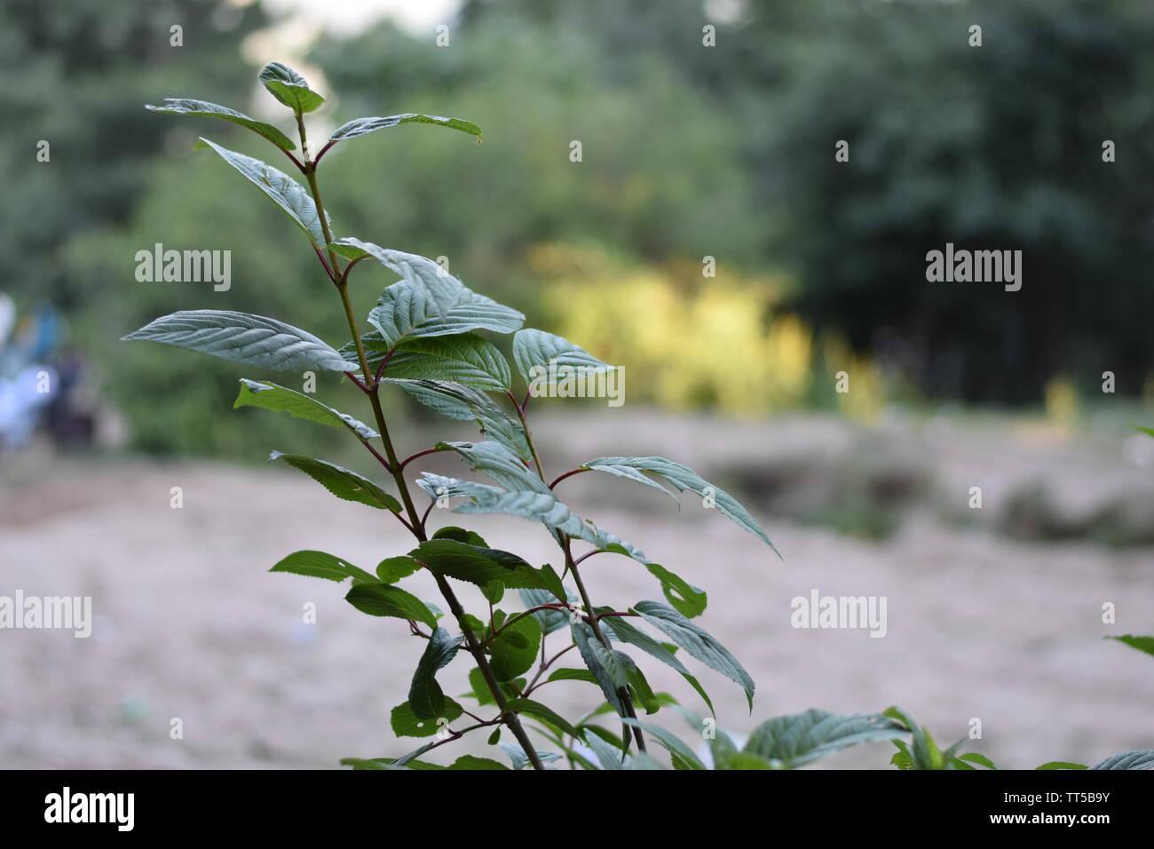 Beautiful Plants on Mountains Stock Photo