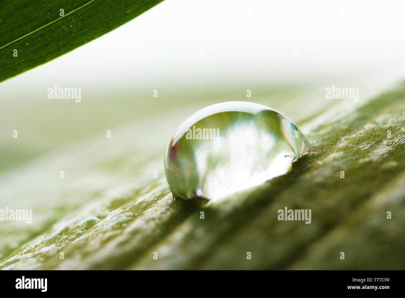 Dew drop on leaf on blurred light background - Stock Image