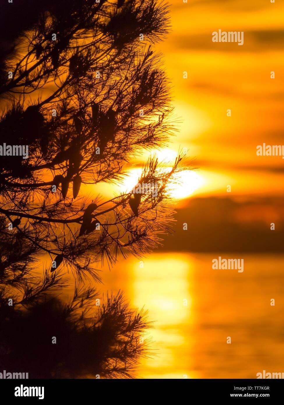 Sunset tree against setting sunset sun unsharp blurred low above sea horizon Stock Photo