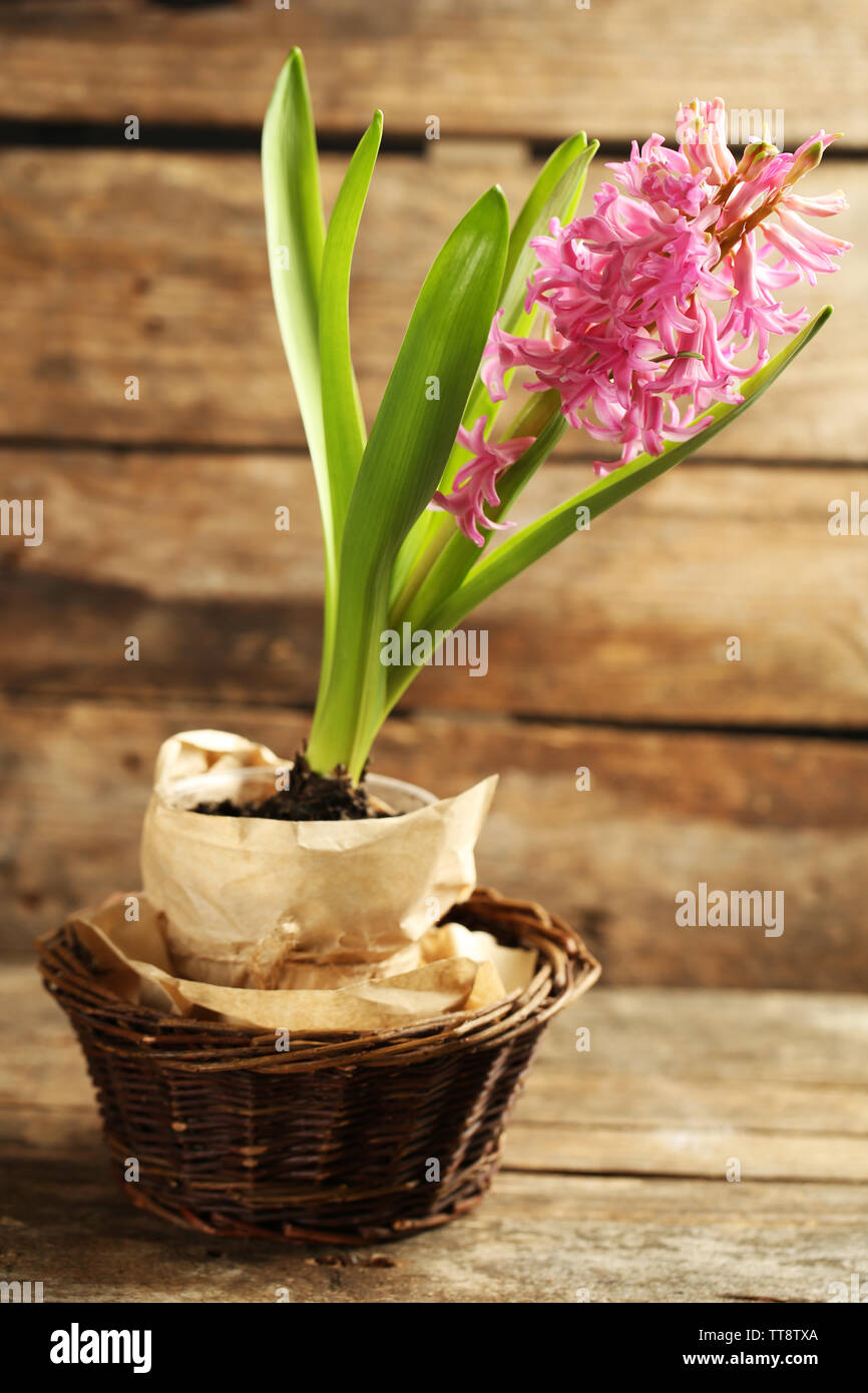 Beautiful hyacinth flower on wooden background - Stock Image