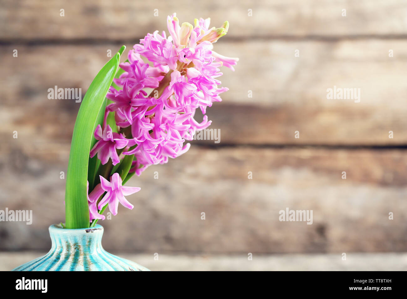 Beautiful hyacinth flower in vase on wooden background - Stock Image