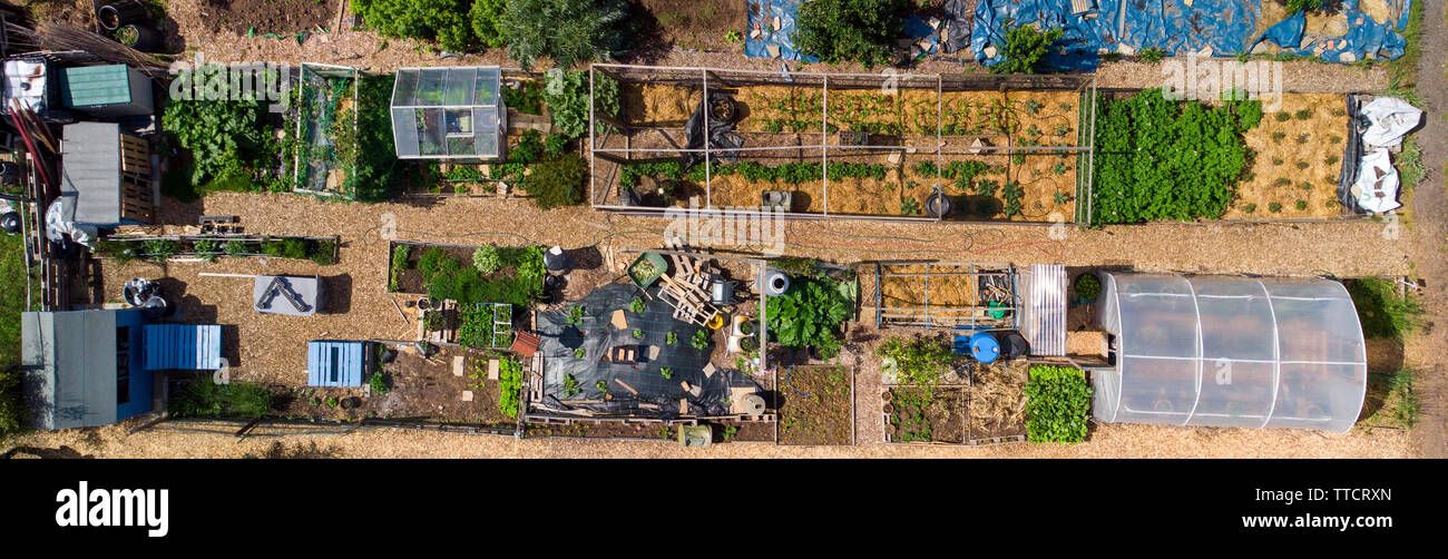 Drone view of a large allotment in Cole Park Allotments, Isleworth - Stock Image