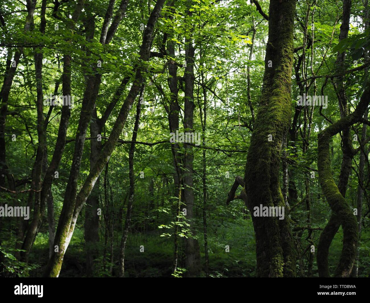 Moss Spiral Stock Photos & Moss Spiral Stock Images