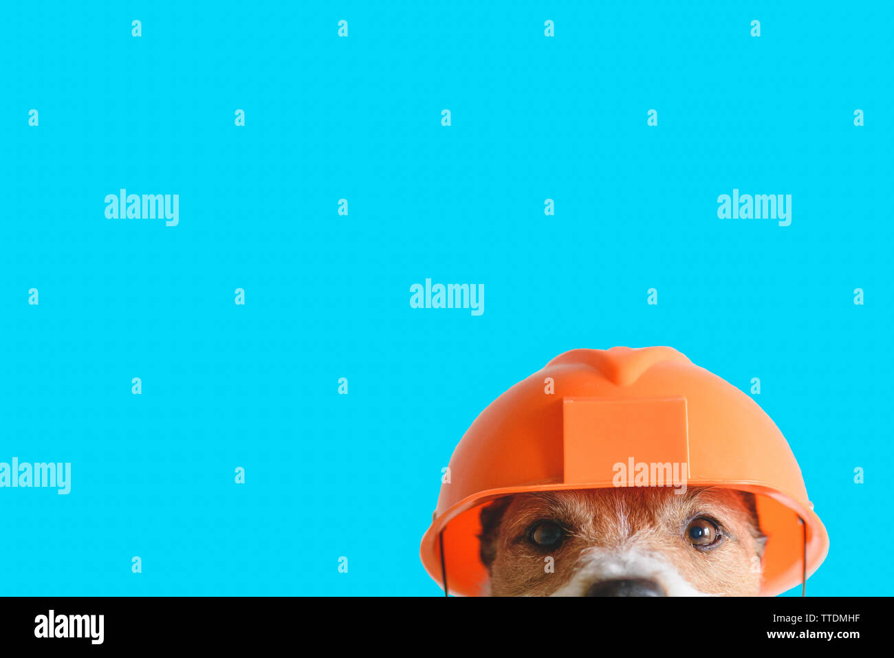 Safety, construction, DIY concept - cute dog in hard hat on color background - Stock Image