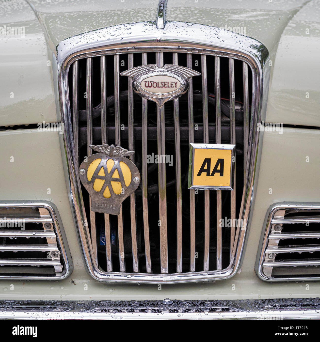 Front chrome radiator grille of Wolseley car with traditional AA metal badges - Stock Image