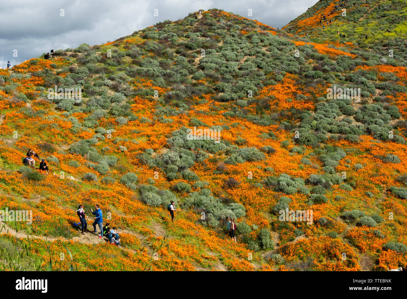 Lake Elsinore, CA / USA - March 9, 2019: Tourists from all over the world hike in the hills of Walker Canyon in order to enjoy the California poppies. - Stock Image