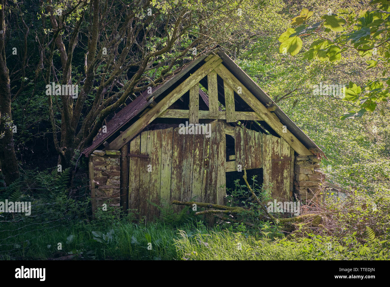 Old wooden shack in the countryside - Stock Image