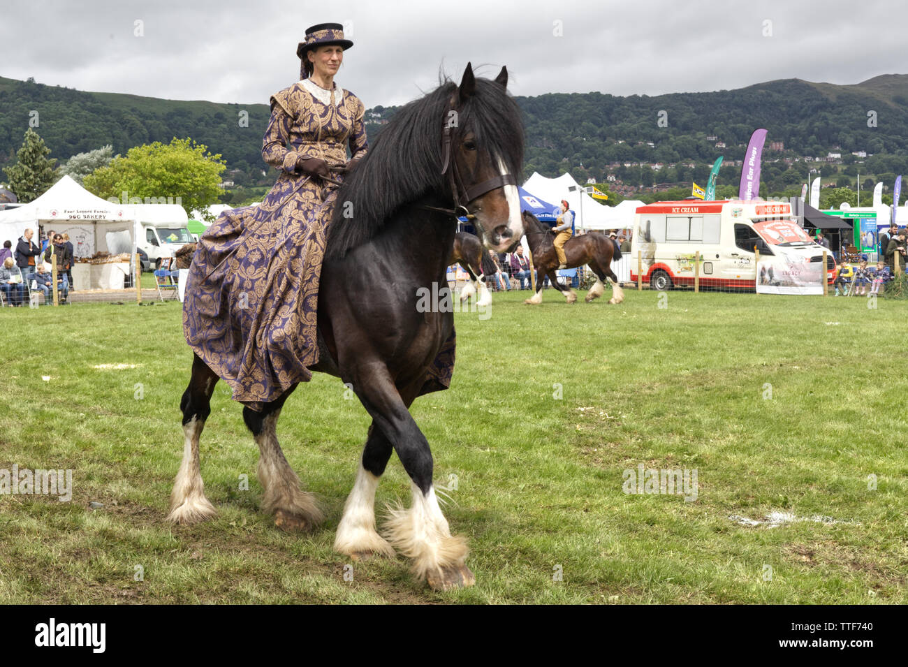 A shire horse being ridden by a lady dressed in Victorian clothing, shire horses through the ages - Stock Image