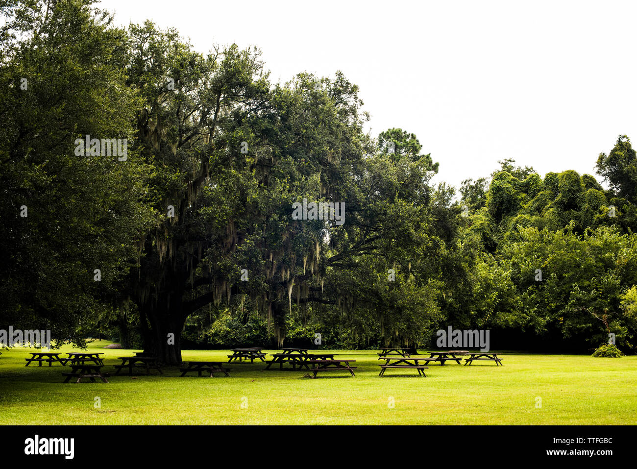 Picnic Tables in Charles Towne Landing park Stock Photo