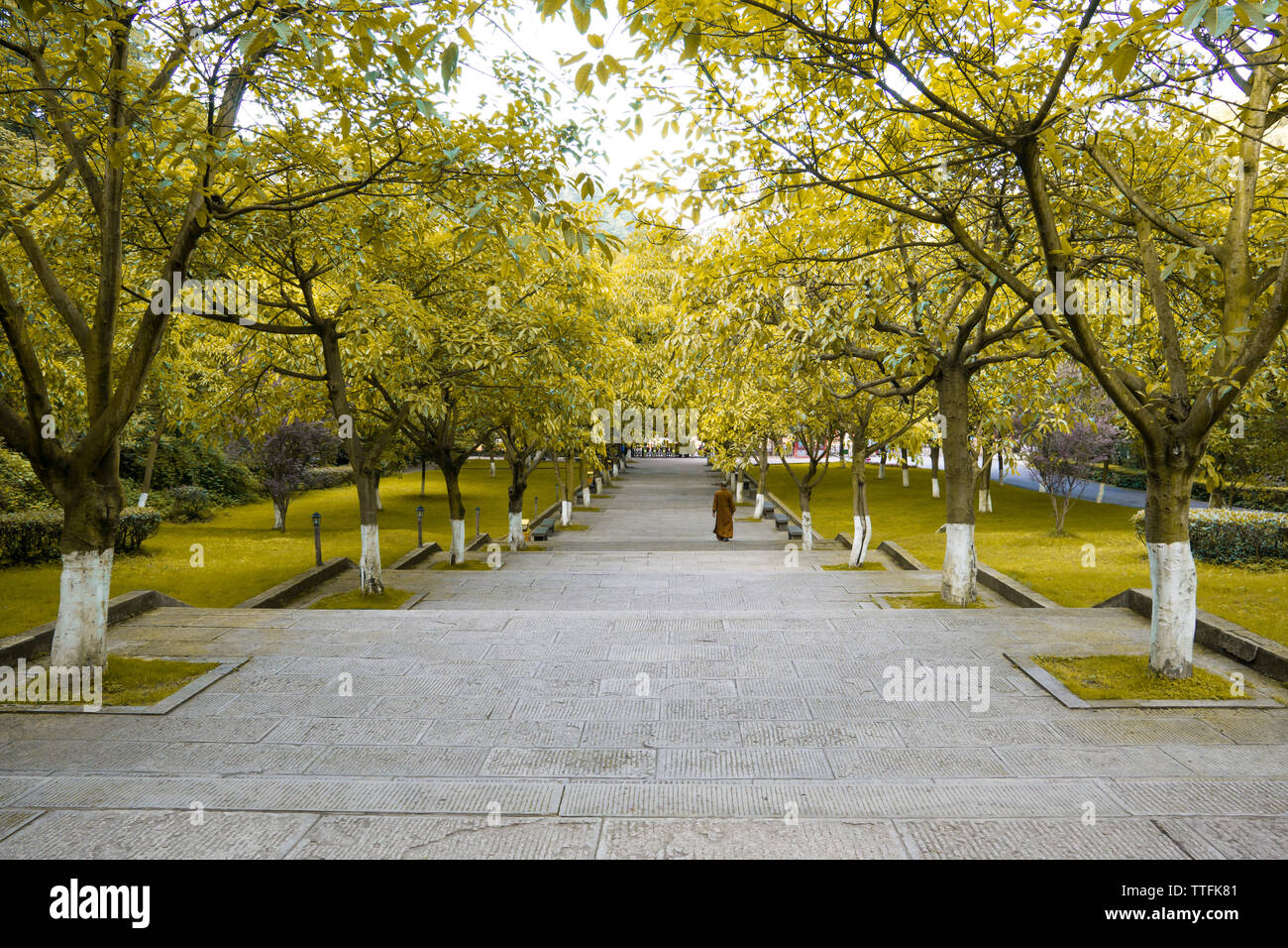 Diminishing perspective of steps amidst trees at park - Stock Image