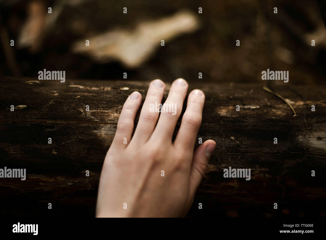 Cropped hand of woman touching tree trunk in forest - Stock Image