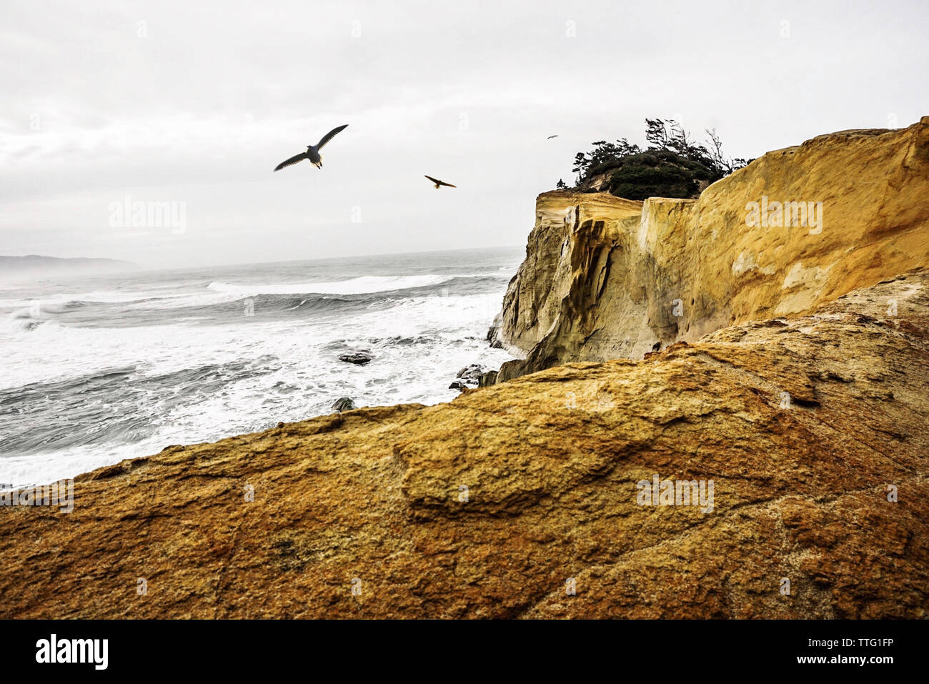 Birds flying over sea against cloudy sky Stock Photo