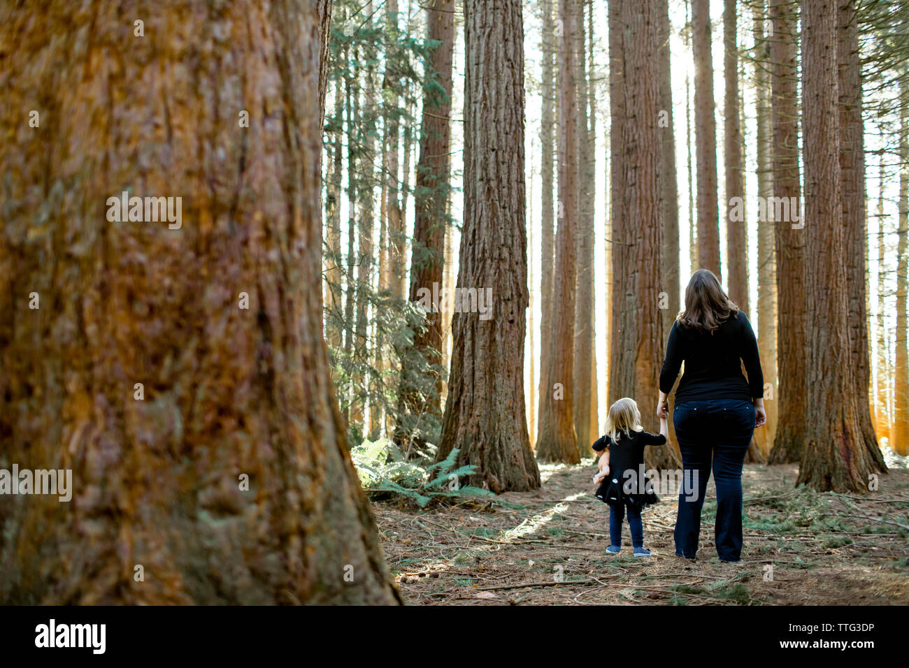 Mother and daughter look up in awe of Redwood forest. - Stock Image