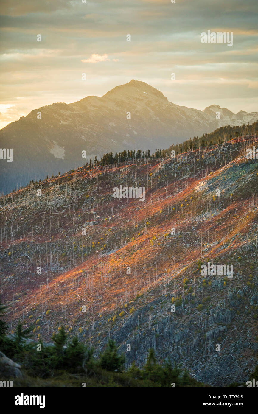 Autumn colors illuminated by alpenglow on previously burnt mountain. - Stock Image