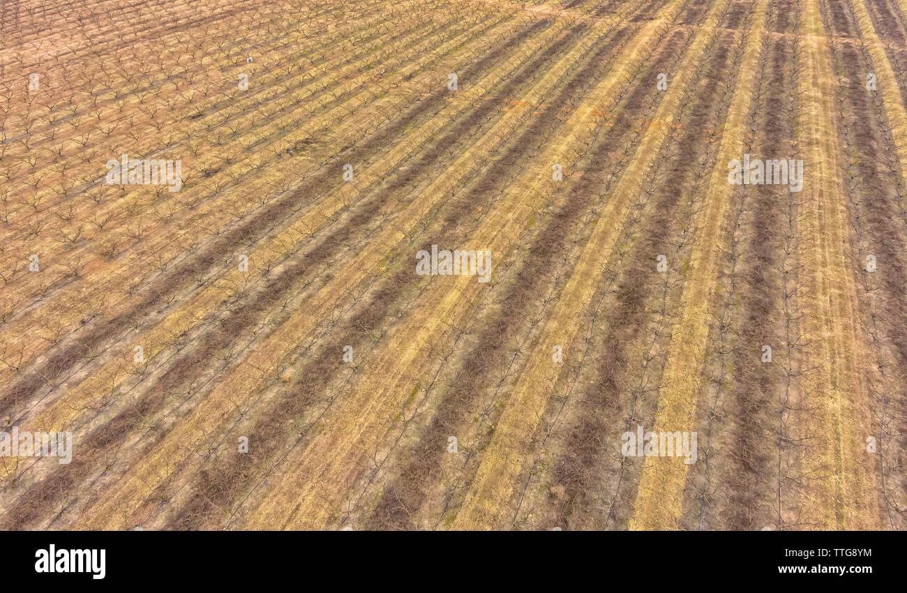 Farmland getting prepared for spring harvest - Stock Image