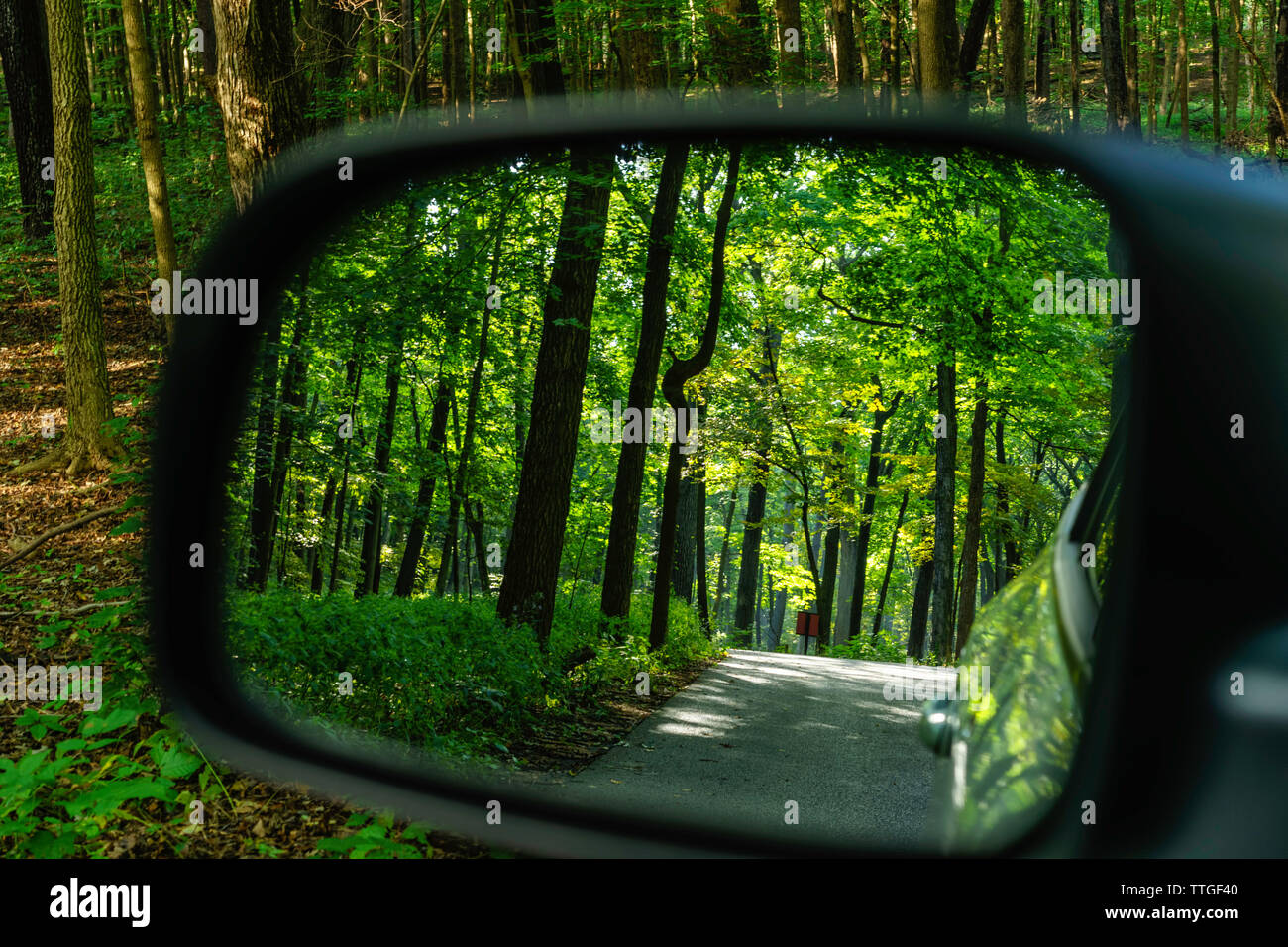 Silhouette of tree trunk with odd curve in rear-view mirror in woods - Stock Image