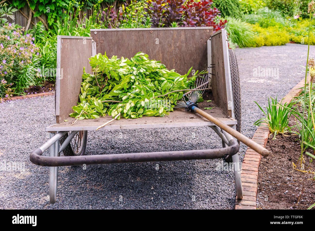 Handcart with rake and pile of green cuttings on garden path in summer - Stock Image