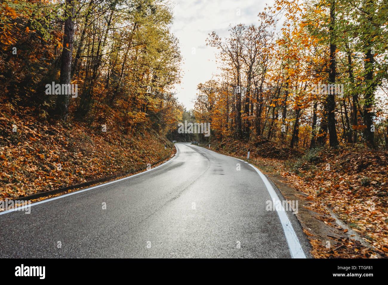 Asphalt road through the yellow forest in Tuscany, autumn season Stock Photo