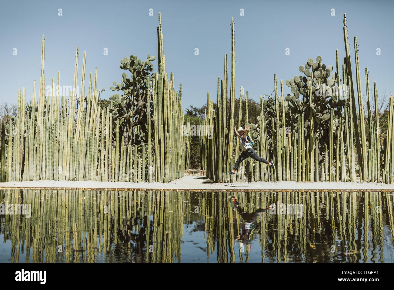 young lady leaps in joy next to reflecting pool of cactus - Stock Image