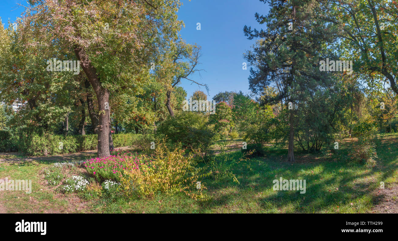 Trees in the Old Botanical Garden in Odessa, Ukraine, on a sunny autum Stock Photo