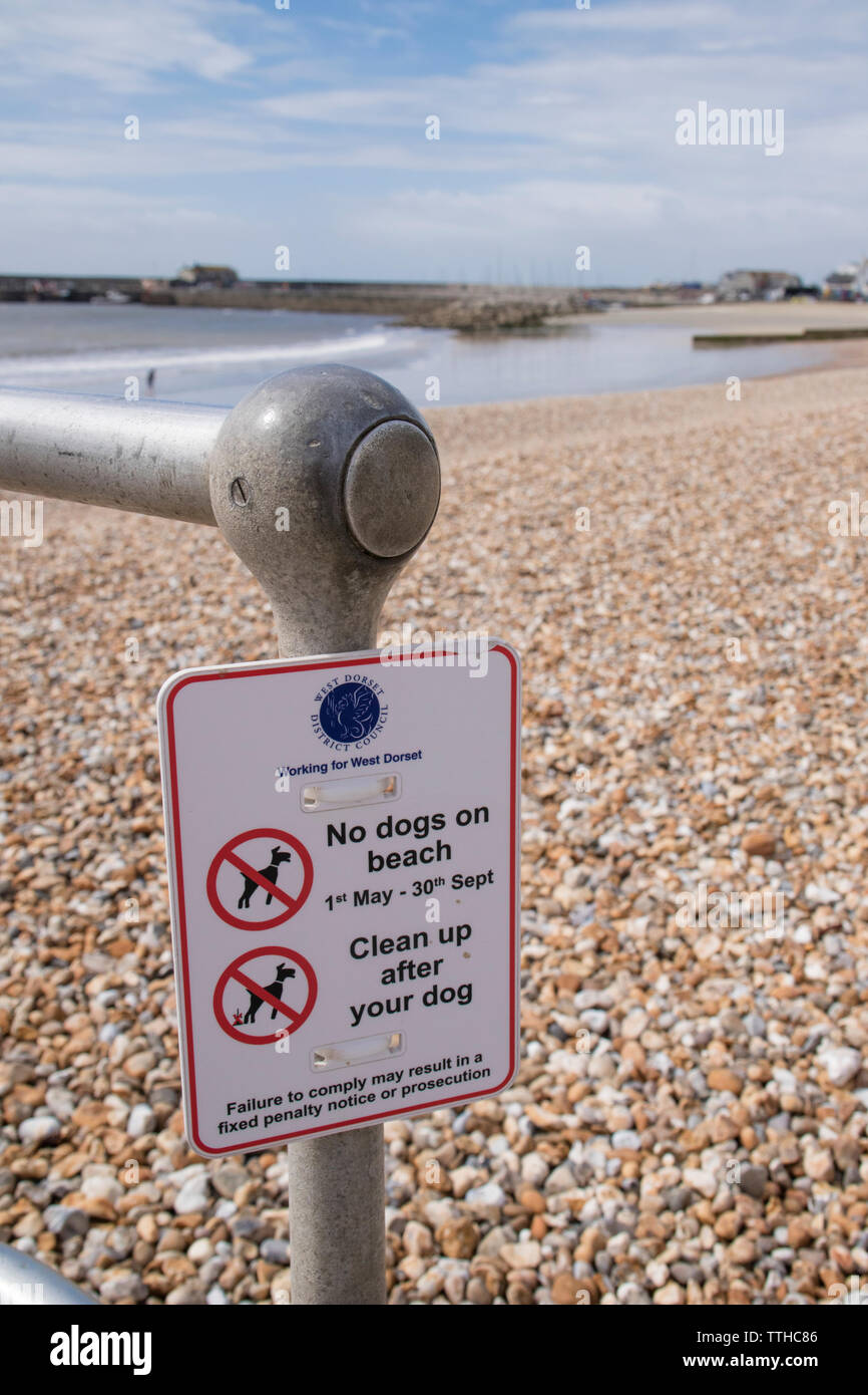 Sign on Lyme Regis beach restricting dogs on beach between 1st May to 30th September - Stock Image