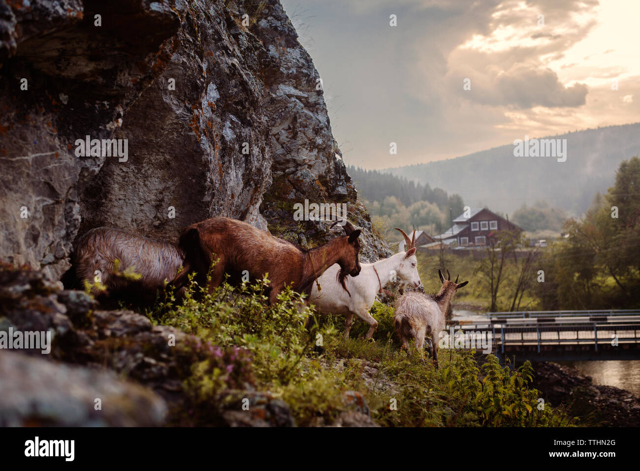Goats by mountain against cloudy sky - Stock Image