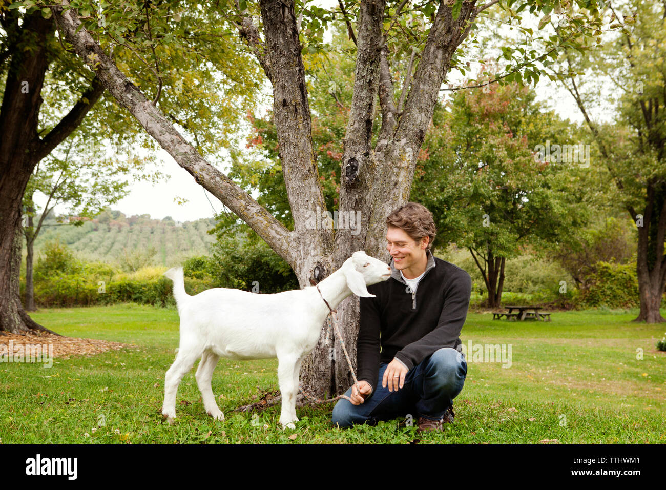 Happy man with goat on grassy field - Stock Image