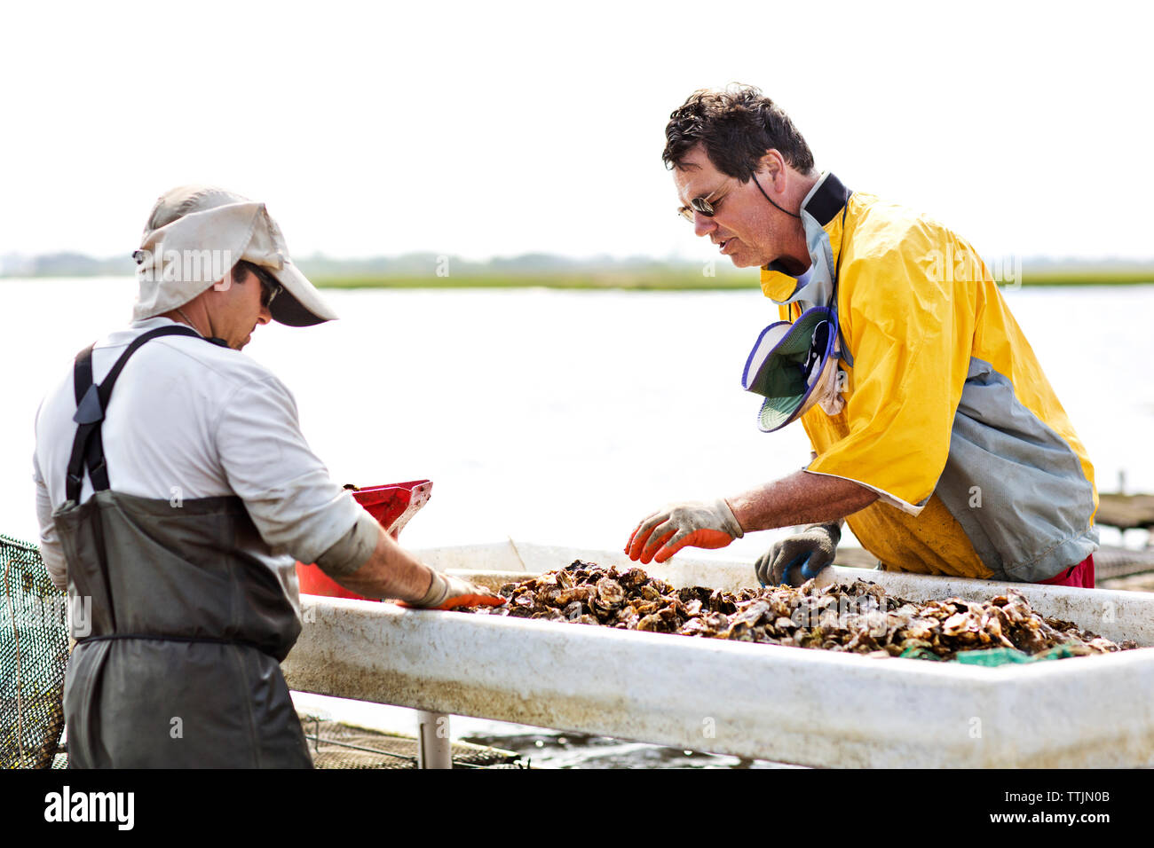 Workers working at fishing industry Stock Photo