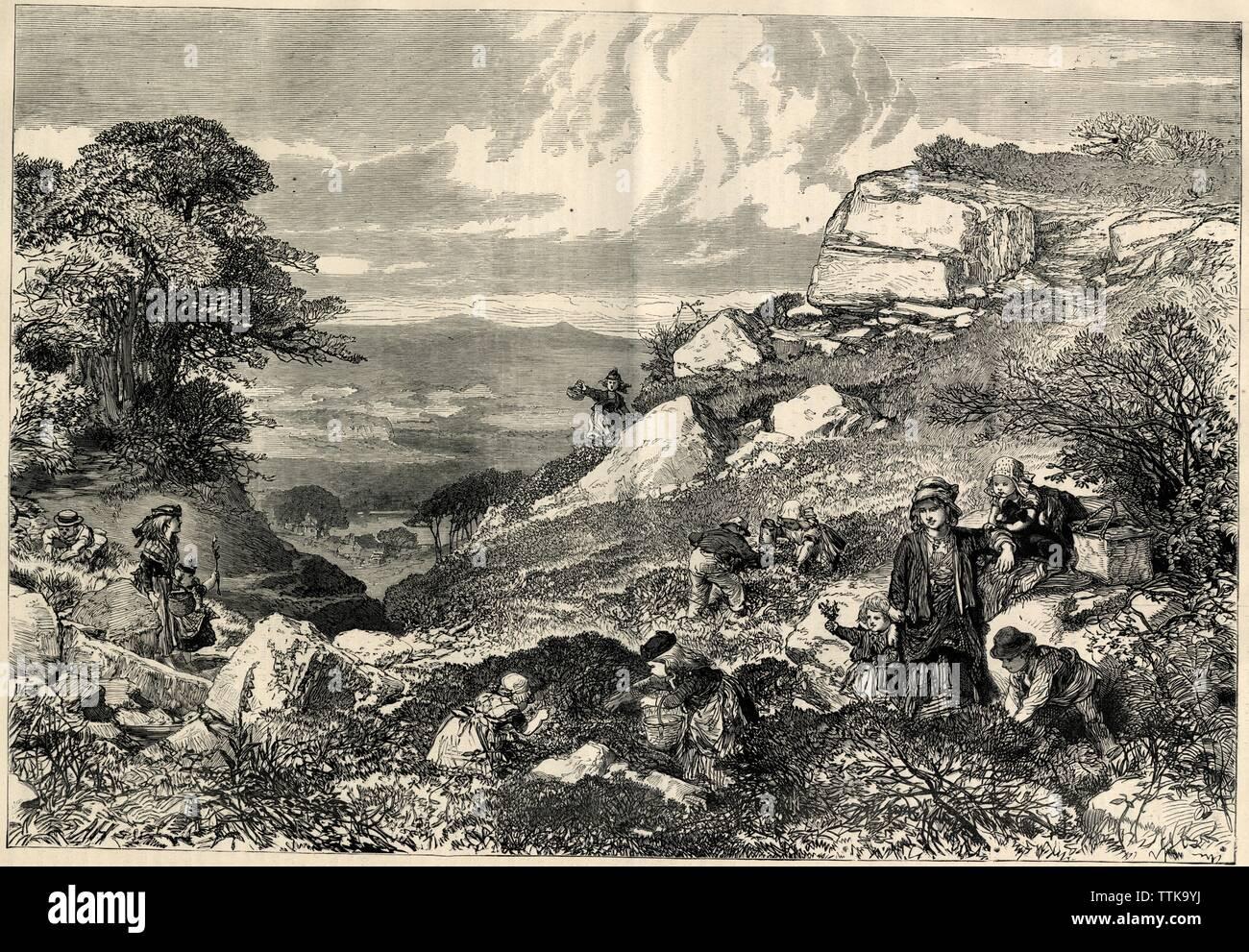 .LA RÉCOLTE DES MURES.1871 - Stock Image