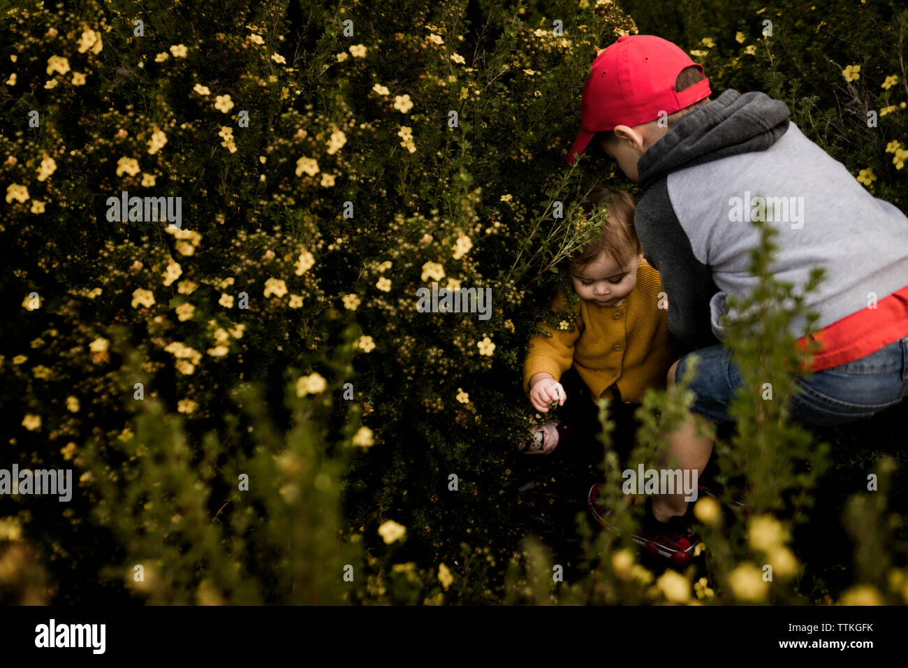 Boy helping his little sister up in a flower bush Stock Photo