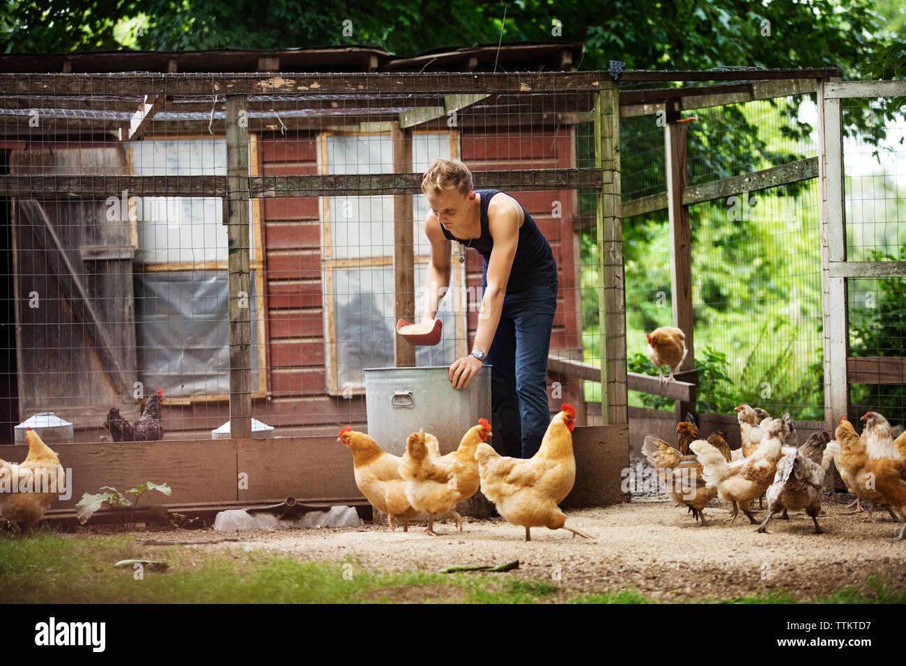 Farmer feeding hens Stock Photo