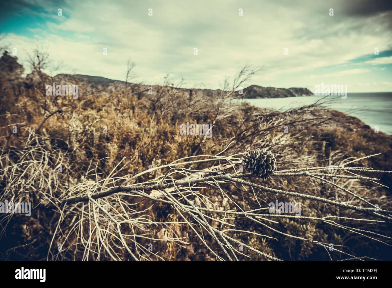 Close-up of dried plants at beach against cloudy sky - Stock Image