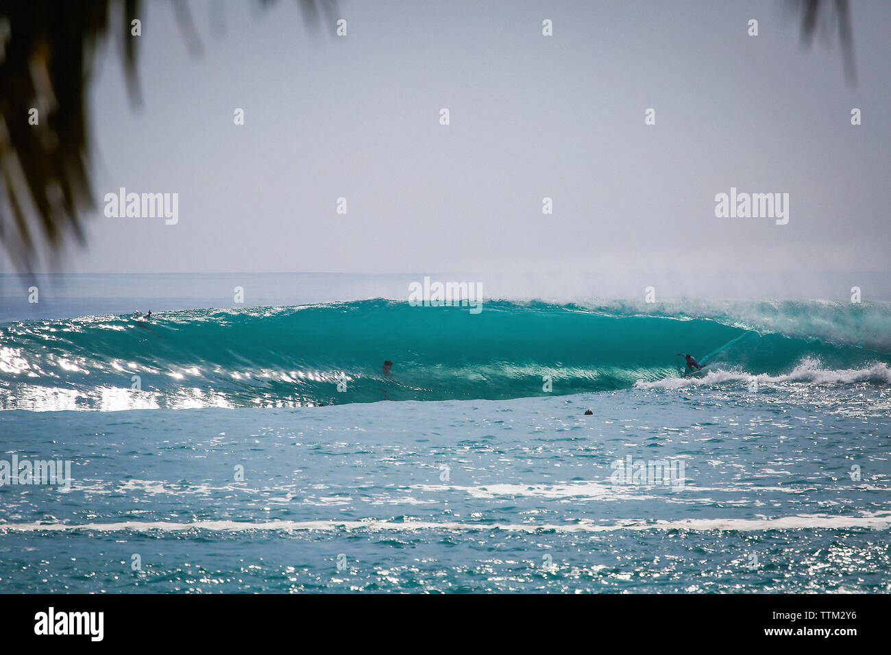 People surfing in sea at Mentawai Island against clear sky - Stock Image