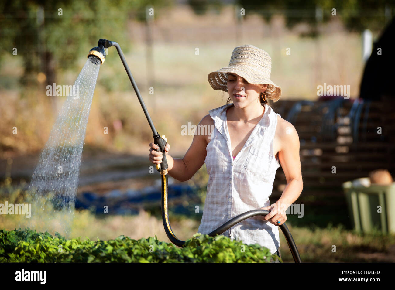 Young female farmer watering plants on field Stock Photo