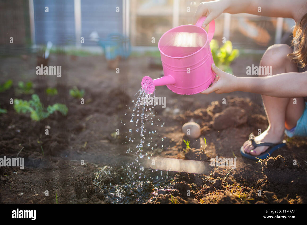 Midsection of girl watering seedling in backyard - Stock Image