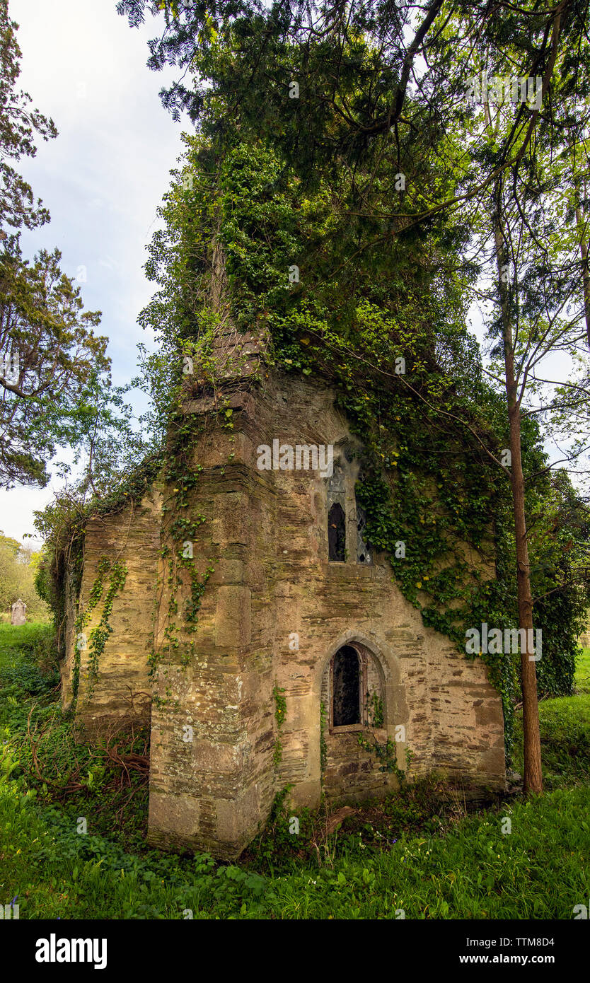 St Cohan Church in Merther, Cornwall, long abandoned and being reclaimed by nature Stock Photo