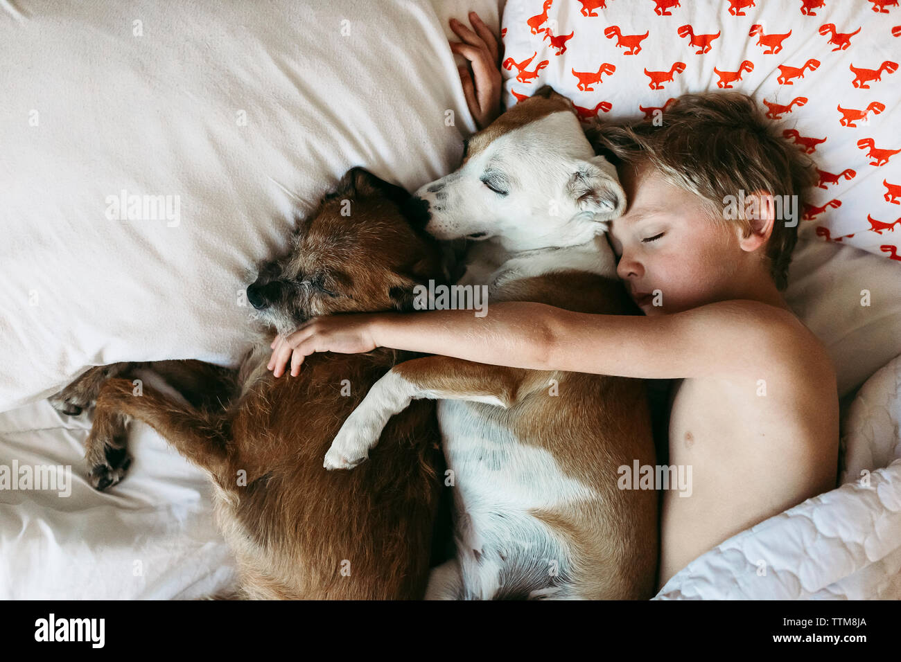 Overhead view of shirtless boy sleeping with dogs on bed - Stock Image