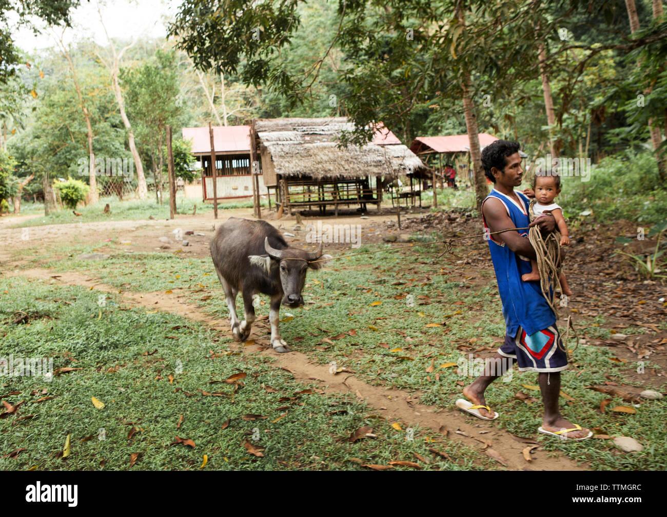 PHILIPPINES, Palawan, Barangay region, a Batak man named Gadong Sa'avedra walks with his niece Liralyn while leading a cow in Kalakwasan Village - Stock Image